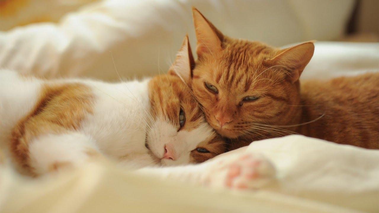 Развиващие задания. Открытки спокойной ночи Гифки с пожеланиями сладких снов с котиками Картинки с пожеланиями спокойной ночи баю бай с кошками