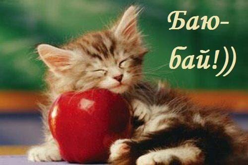 Открытки Гифки с пожеланиями сладких снов с котиками Картинки с пожеланиями спокойной ночи баю бай с кошками